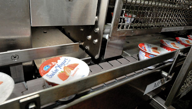 Swiss yogurt on conveyor