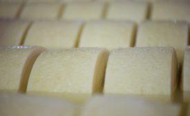 Arthur Schuman Inc. cheese importer