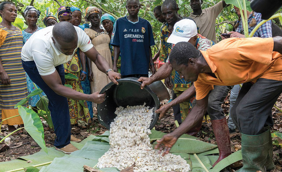 An inside look at Barry Callebaut's cocoa production in West Africa