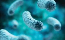 Dairy processors, consider the probiotic strain