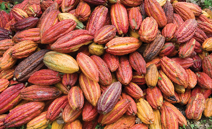 Environmental, social issues threaten chocolate and cocoa
