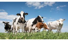 Organic dairy processors have a mission