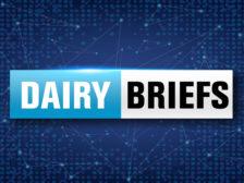 Dairy briefs
