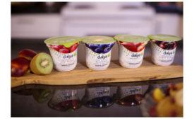 Daiya nondairy yogurt