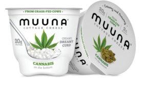 Muuna Cannabis cottage cheese